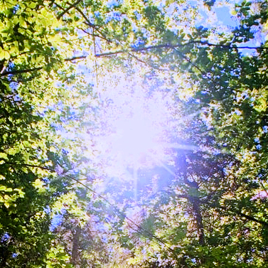 1 Energy Solutions Sun Trees Pic